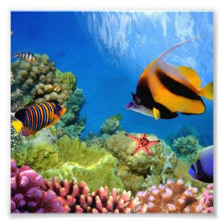 Färgrik korall & tropisk fisk fototryck