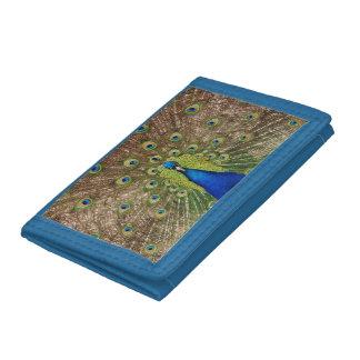 Färgrik påfågeltryckplånbok