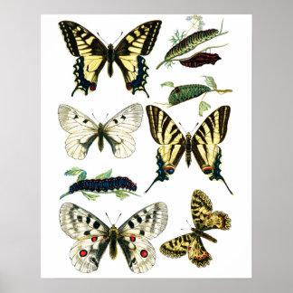 Färgrik Swallowtail fjäril, Caterpillar & mal Poster