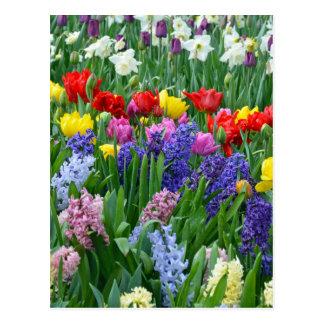 Färgrik vårblomsterträdgård vykort
