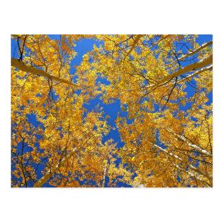 Färgrika Colorado aspen… Vykort