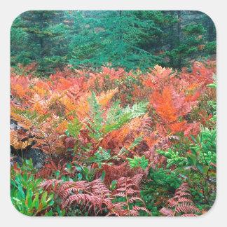 Färgrika Ferns för skog i höstAcadia Maine Fyrkantigt Klistermärke