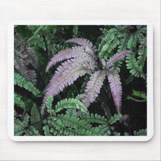 Färgrika Ferns Musmatta