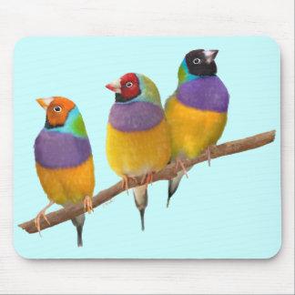 Färgrika Gouldian Finches i pastell Musmatta