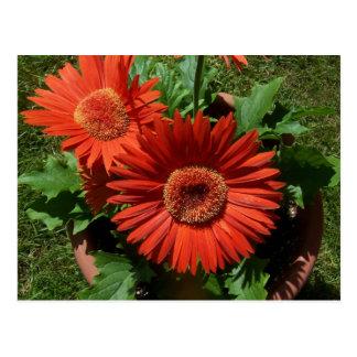 Färgrika inlagda orangeblommor vykort