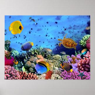 Färgrika korallrevnötkreatur poster