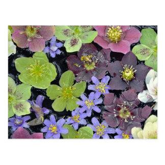 Färgrikt mönster för vårhelleborusblommor vykort