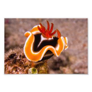 Färgrikt Nudibranch fototryck