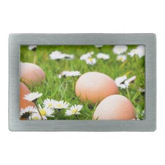 Fega ägg i gräs med daisy