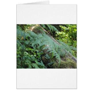 Ferns i skogen hälsningskort