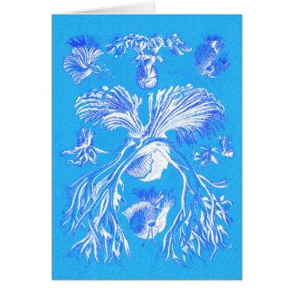 Filicinae på blåttbakgrund hälsningskort