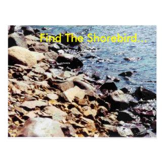 Finna shorebirden… vykort