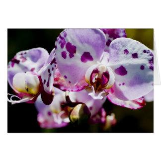 Finnig Orchid Hälsningskort