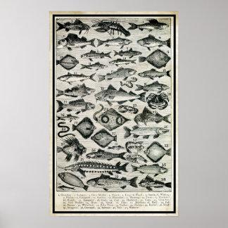 Fisk Poster