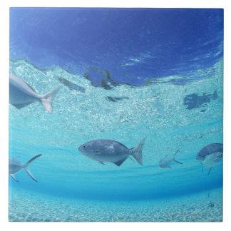 Fiskar i havet 4 kakelplatta