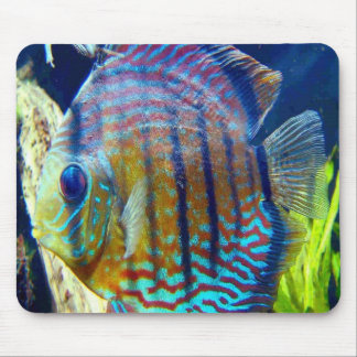 Fisken med stora blåttögon & blått görar randig oc musmattor