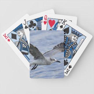 Fiskmås som flyger över vatten som leker kort spelkort