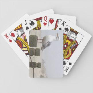 Fiskmås som leker kort spel kort