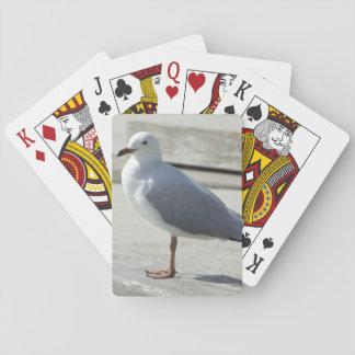 Fiskmås som leker kort spelkort