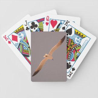 Fiskmås som leker kortdäcket spelkort
