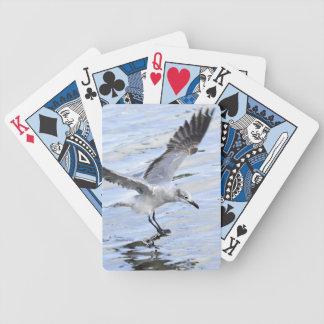 Fiskmåslandning på vatten som leker kort spelkort