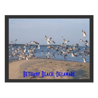 Fiskmåsvykort, Bethany strand, Delaware Vykort