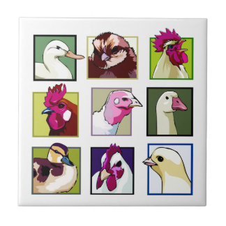 Fjäderfäa fåglar: Fåglar (höna, anka, gås, kalkon) Kakelplatta