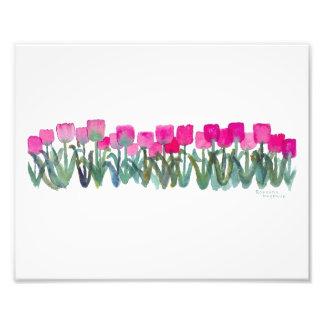 Fjädra rosa tulpan fotografiskt tryck 8 x 10