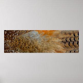 Fjädrar av enHånglad Pheasant Poster