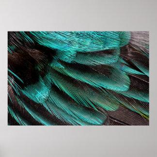 Fjädrar för blåttvingebusksnår poster