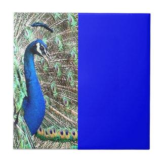 Fjädrar för djur för påfågelfågeldjurliv kakelplatta