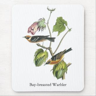 Fjärd-gådd mot sångare, John Audubon Mus Matta
