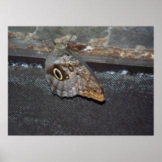 fjäril med ögon poster
