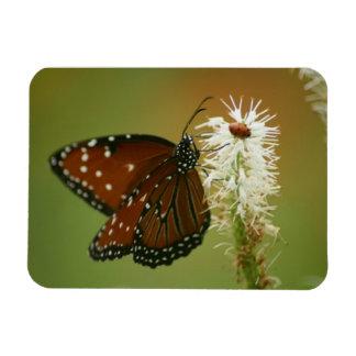 Fjäril och nyckelpiga magnet
