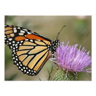 Fjäril på blomma fototryck