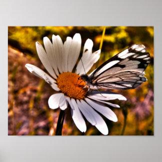 Fjäril på en daisy - overklig fotoaffisch 9x12