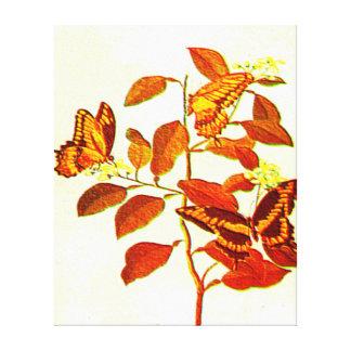 Fjärilar Canvastryck
