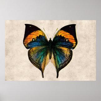 Fjärilar för vintagefjärilsillustration 1800 s print