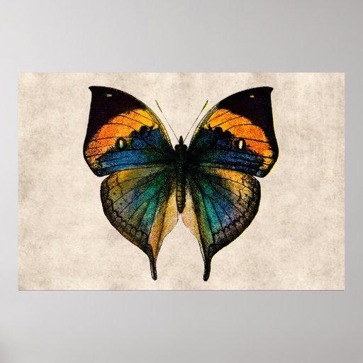 Fjärilar för vintagefjärilsillustration 1800's print