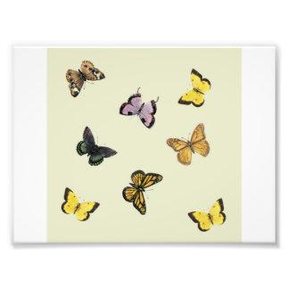 Fjärilar Fototryck
