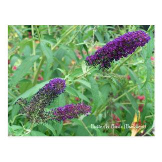 FjärilsBush Buddleja Davidii blommigt Vykort