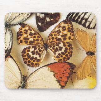 Fjärilssamling Musmatta