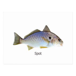 Fläckfiskfoto Vykort