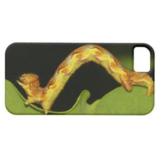 Fläckig umbra som en Caterpillar Erannis iPhone 5 Hud