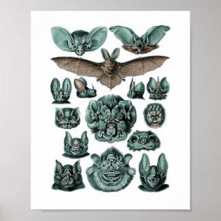 Fladdermöss av Ernst Haeckel Poster