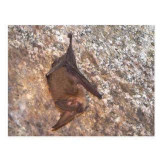 Fladdermöss i en grotta vykort