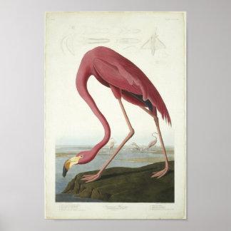 Flamingoen tar en titt affisch