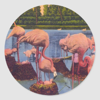 Flamingos Runt Klistermärke