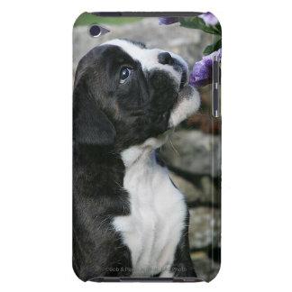 Flåsa för boxarehund barely there iPod skal