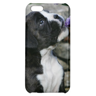 Flåsa för boxarehund iPhone 5C mobil fodral